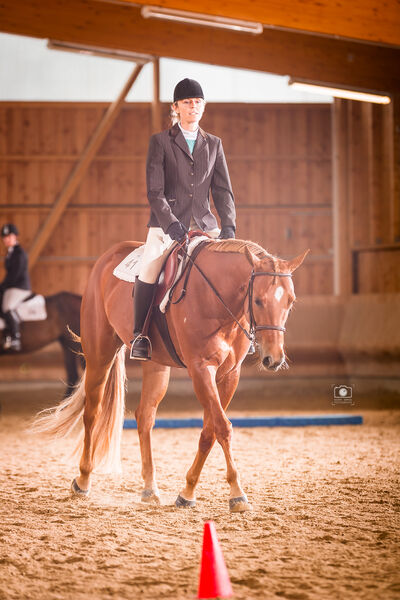 Hunt Seat Equitation - Albuch Open, Dettingen