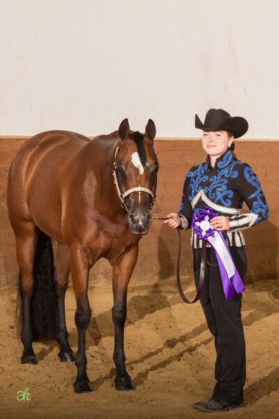 Raisin My Dress - Grand and Reserve Champion Halter Mares Open, Süd-Futurity 2014, Thierhaupten